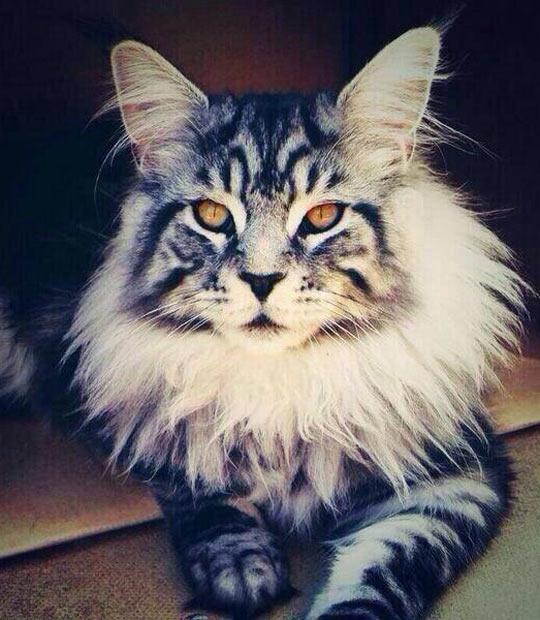 Majestic cat…