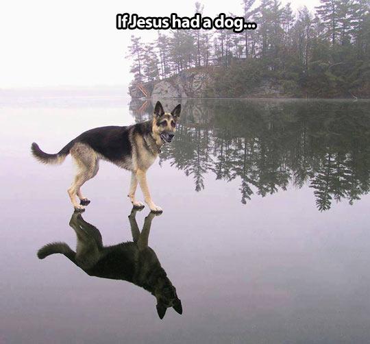 cool-dog-Jesus-lake-walking