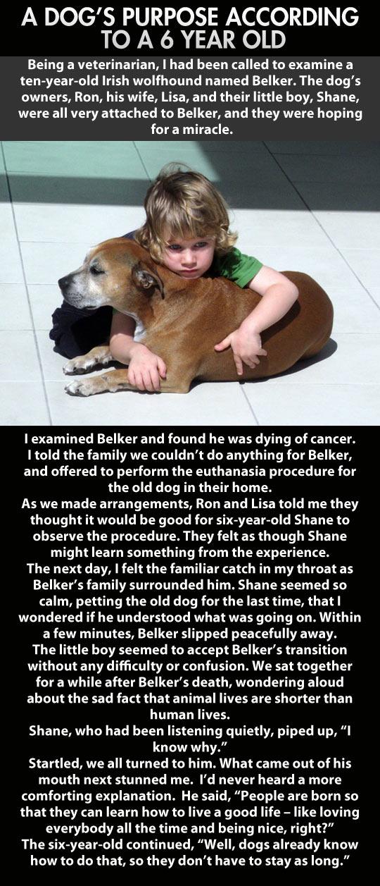cool-kid-dog-purpose-cancer-sick-euthanasia