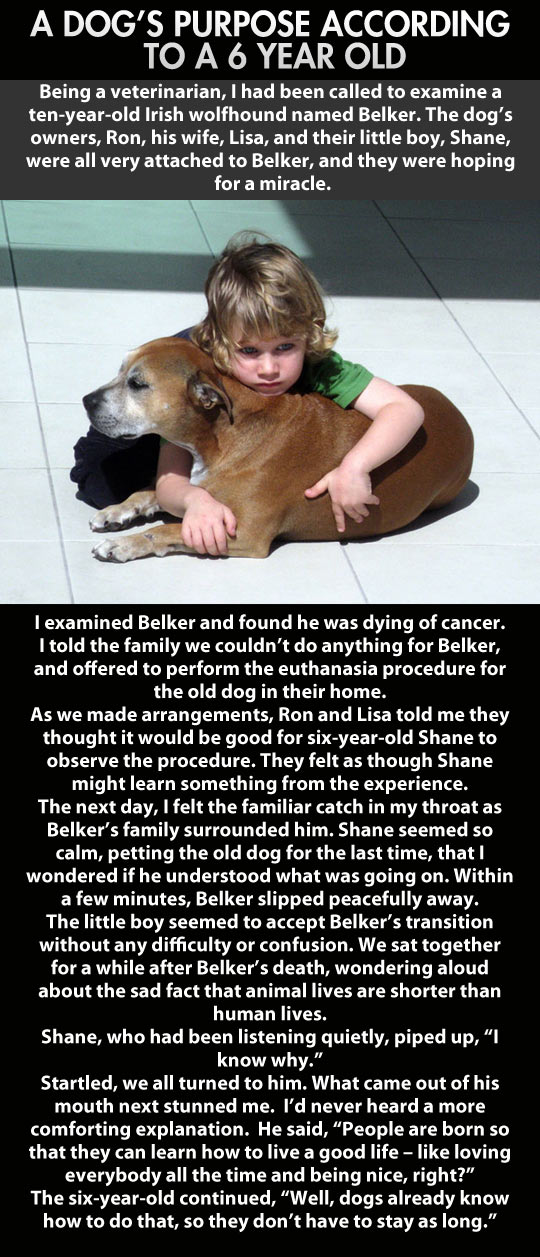 Dogs have so much to teach us…