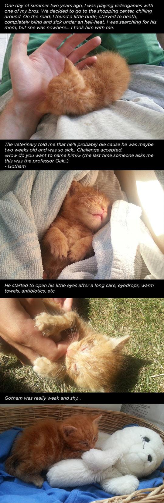 cool-kitten-cat-kitty-Gotham