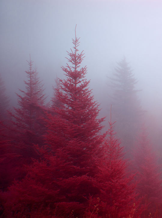 Red forest…