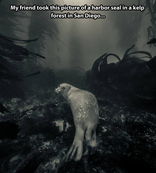 Harbor seal in the wild…