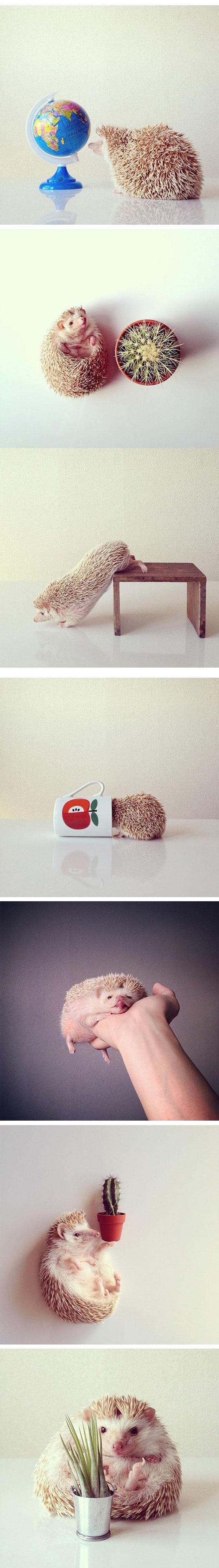 cute-hedgehog-Instagram-pics-hand