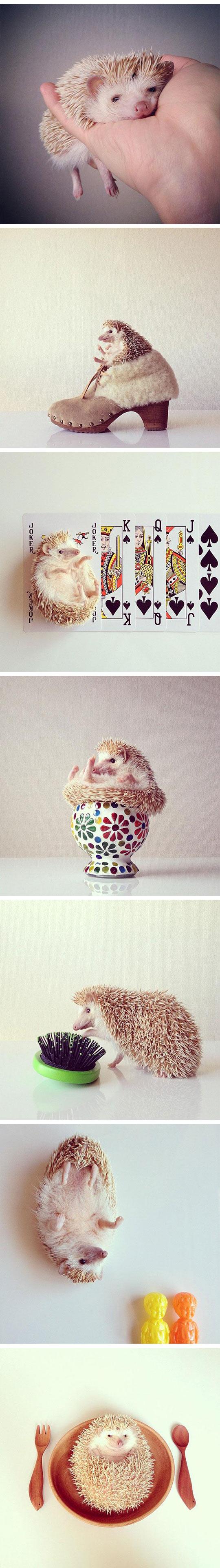 cute-hedgehog-Instagram-pics-plate