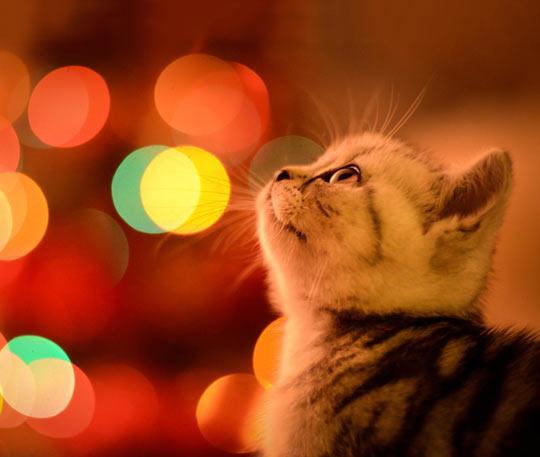 Waiting for Christmas…