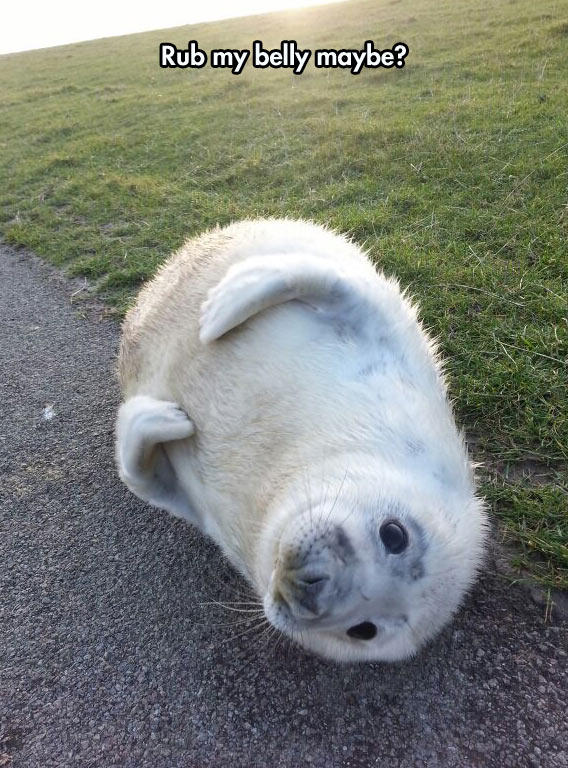 cute-seal-grass-belly