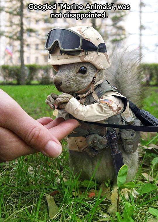 Marine squirrel…