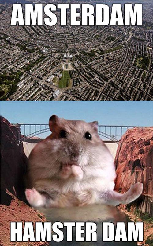 funny-Amsterdam-hamster-dam-big