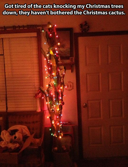 funny-Christmas-cactus-lights-cats