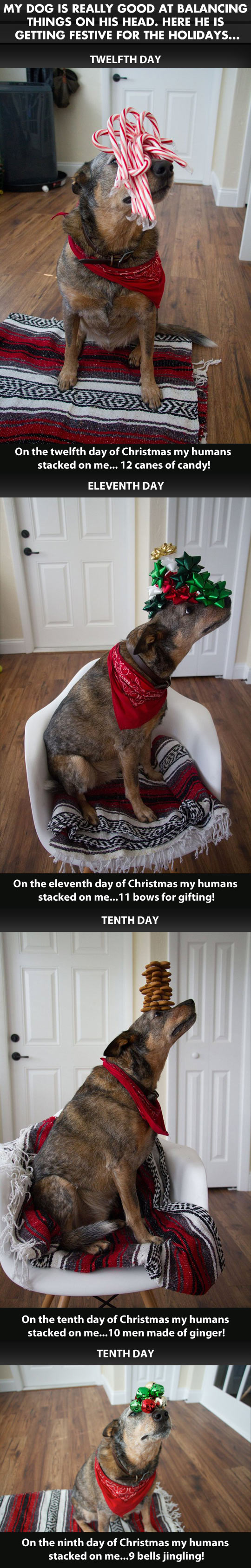 The Christmas spirit is strong with this one…