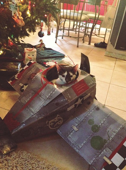 funny-Christmas-kitten-plane-cat