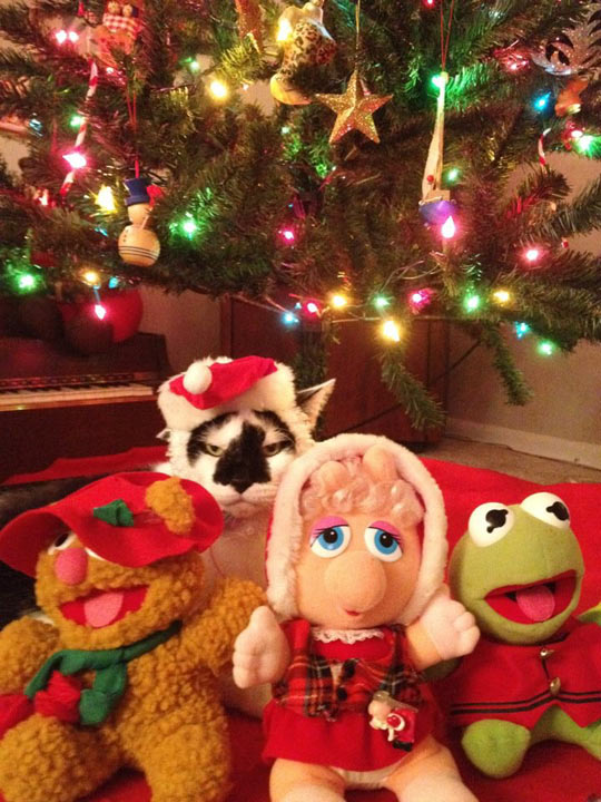 funny-Christmas-tree-Muppets-cat