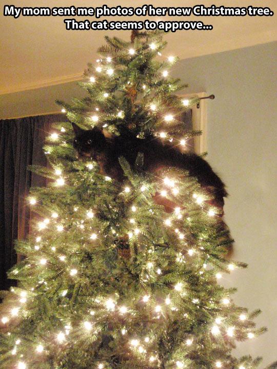 funny-Christmas-tree-cat-lights-stuck