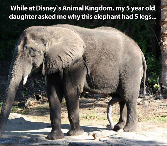 A well gifted elephant…