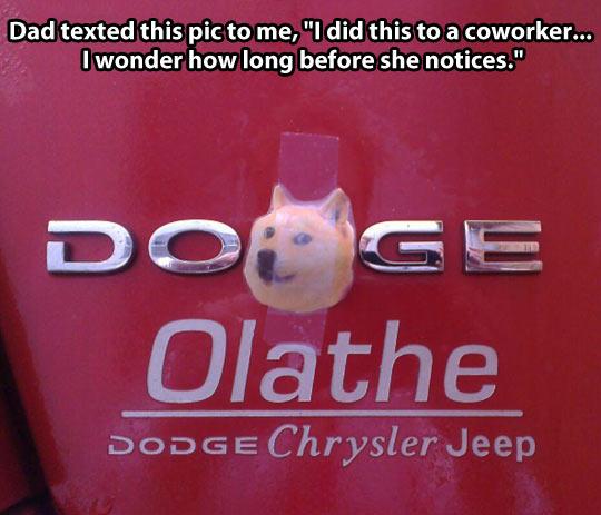 Doge transportation…