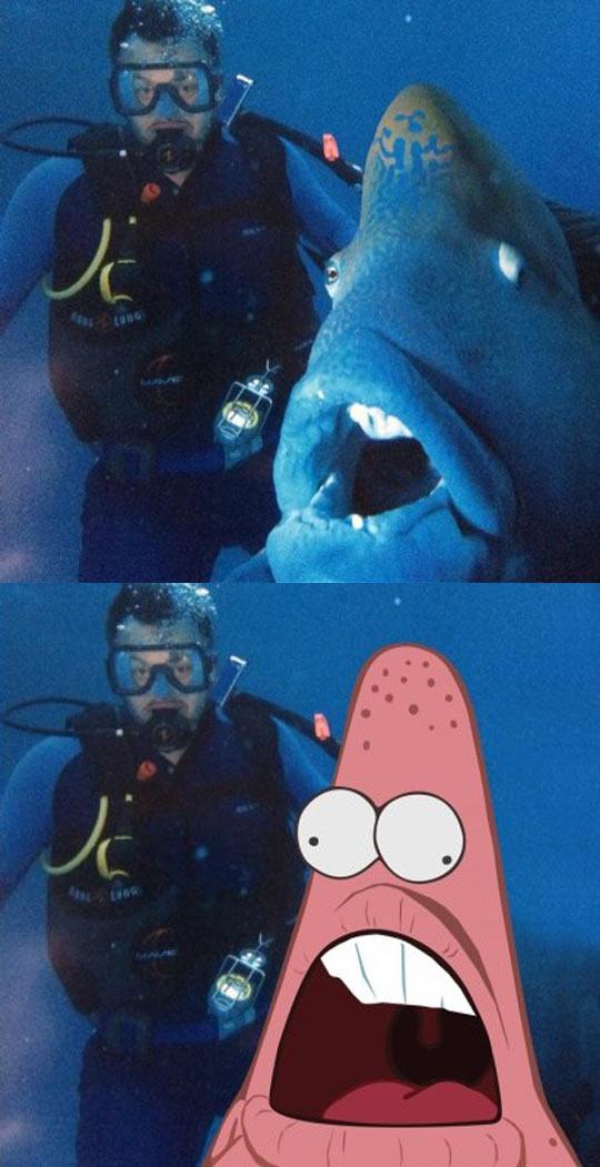 funny-Patrick-star-diver-shark-sea