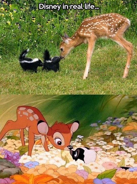 funny-animals-Disney-real-cartoons