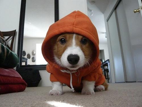 funny-animals-wearing-hoodies-dog-cat