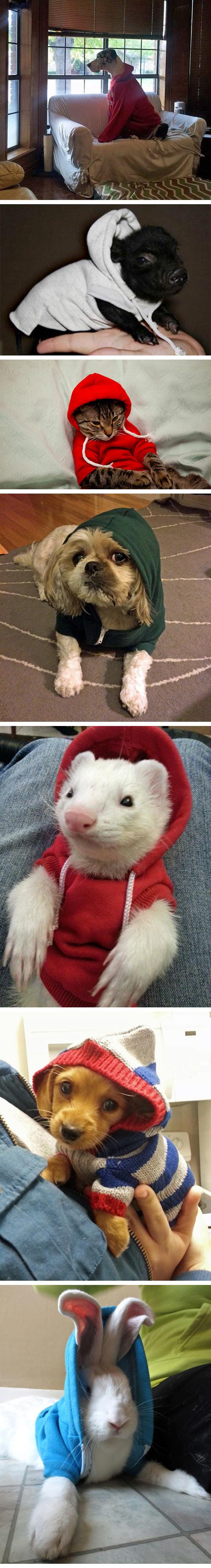 funny-animals-wearing-hoodies-dog-pig