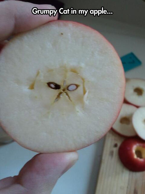 Look who I found in the center of my apple…