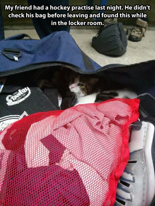 Hidden cat…