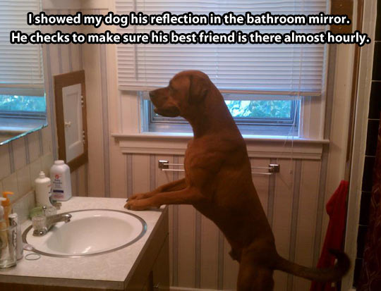 That other dog…