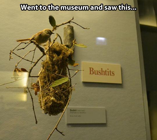 funny-bird-tree-nest-museum