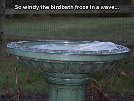 funny-birdbath-water-ice-bin