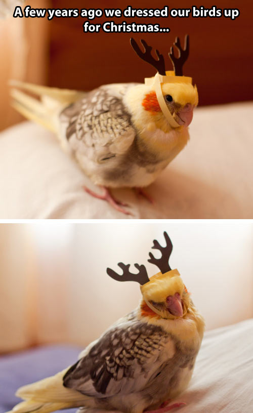 Birds ready for Christmas…