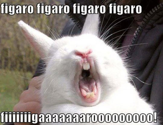 funny-bunny-mouth-yell-snout