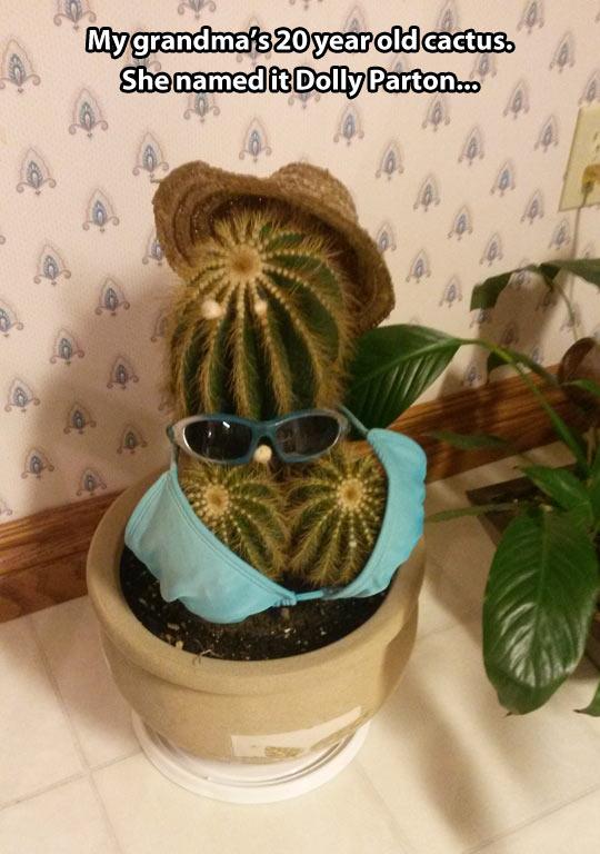 funny-cactus-costume-glasses-hat
