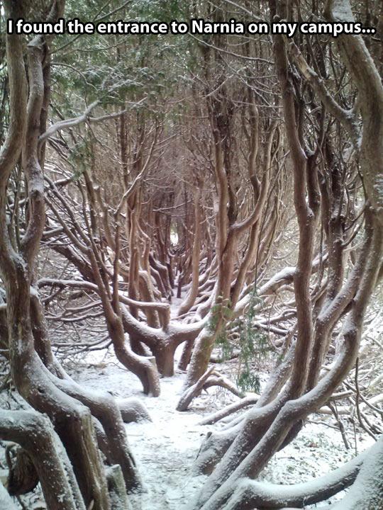 Entrance to Narnia…