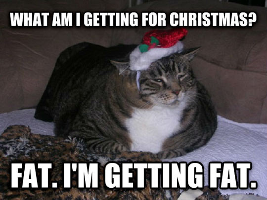 funny-cat-Christmas-fat-kitten