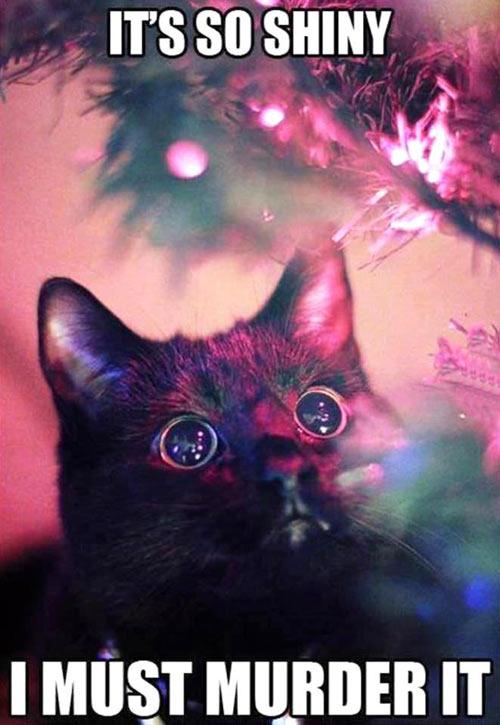 funny-cat-black-eyes-killer