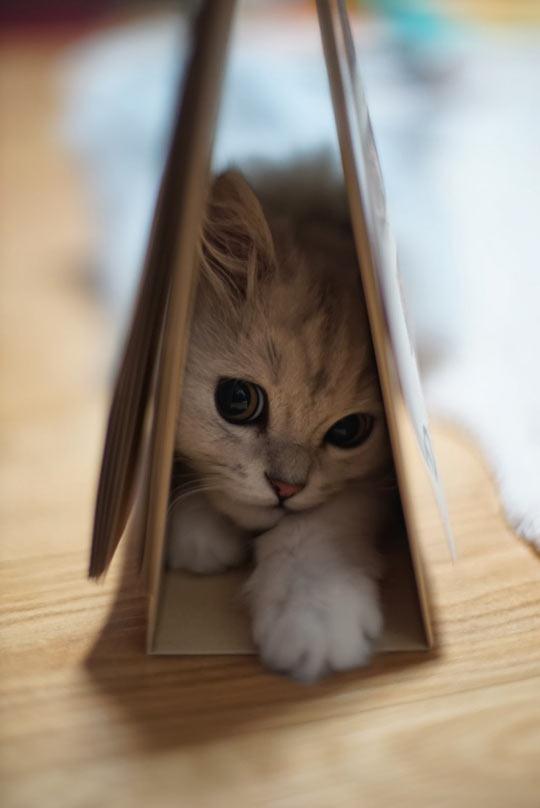 Sweet little kitty…