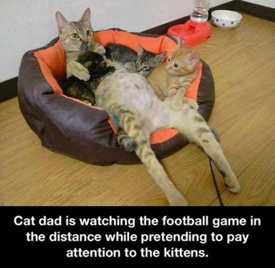 funny-cat-dad-kittens-son-family