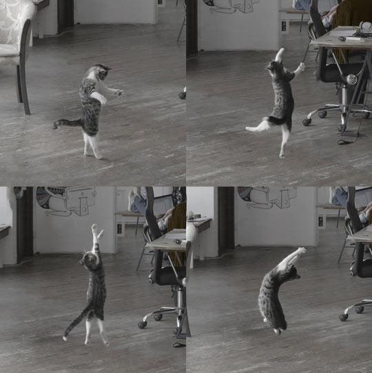 Fabulous dancing skills…