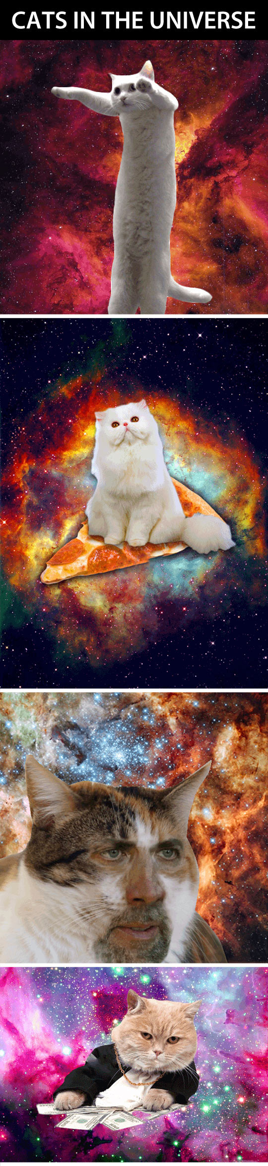 Pictures of majestic cats in space...
