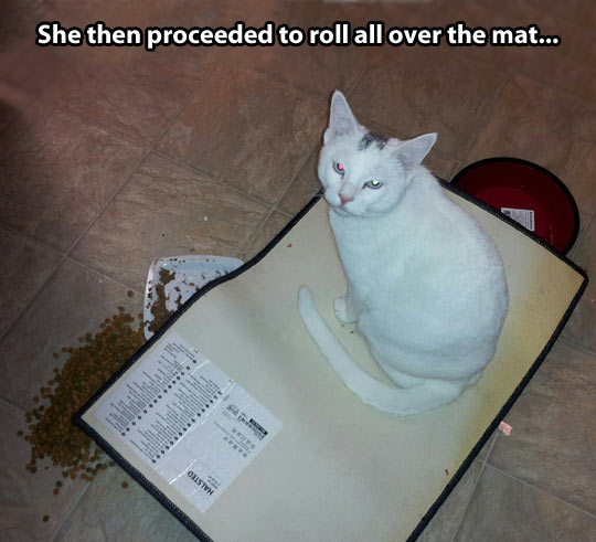 funny-cat-food-bowl-stare