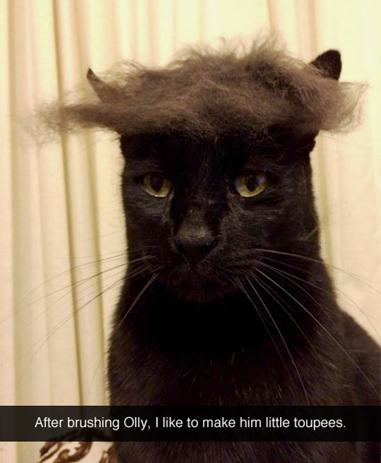After brushing my cat…