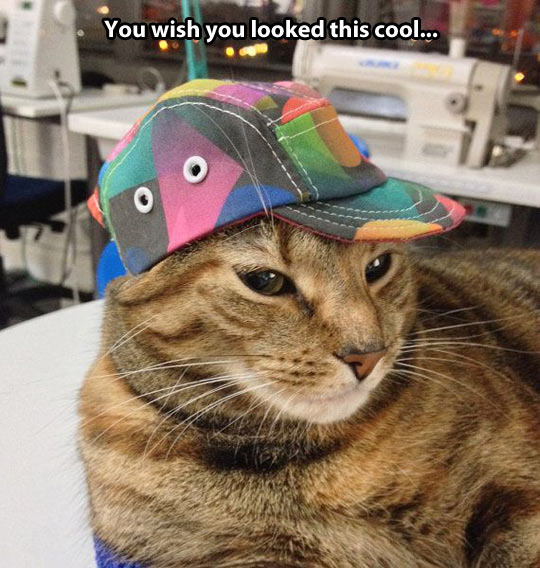 The hat fits perfectly…