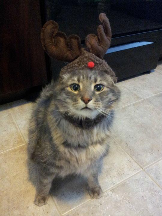funny-cat-kitty-reindeer-big-eyes