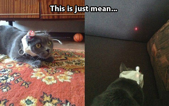 funny-cat-laser-taped-head