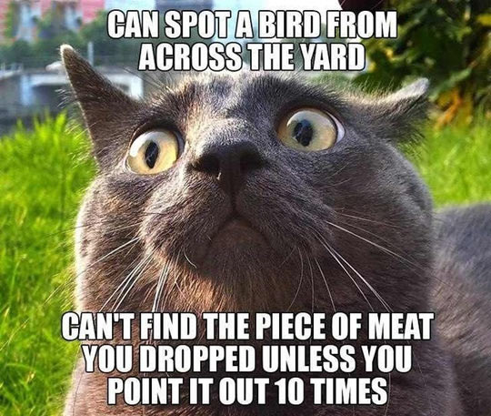 Every cat I've ever got to know…