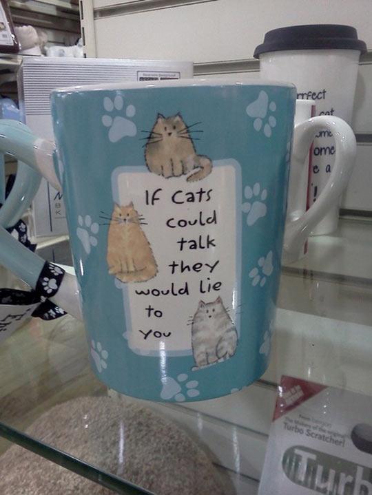 funny-cat-mug-lie-talk