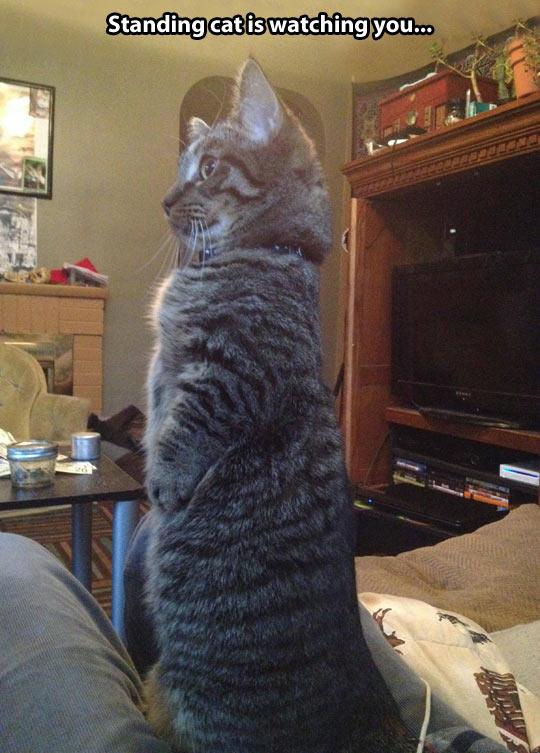 Standing cat…