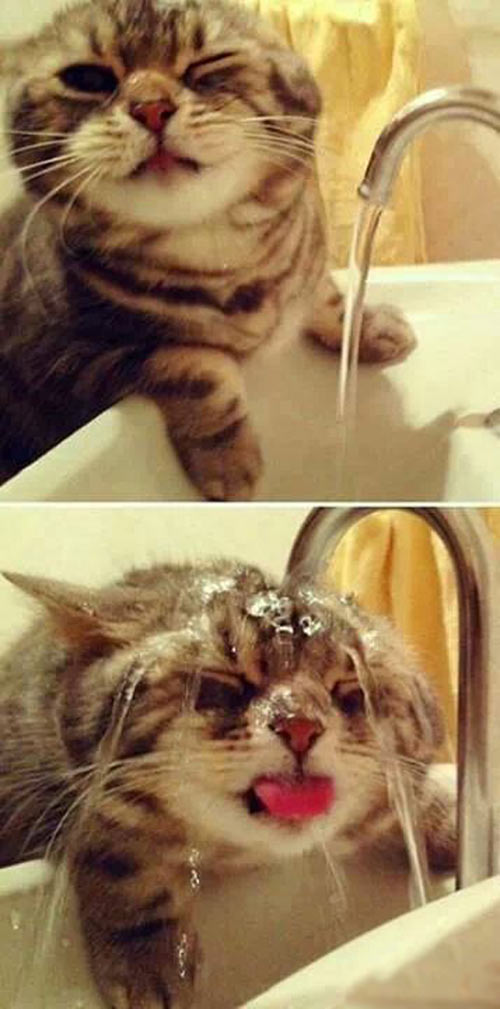 Cat + Water = Happiness?