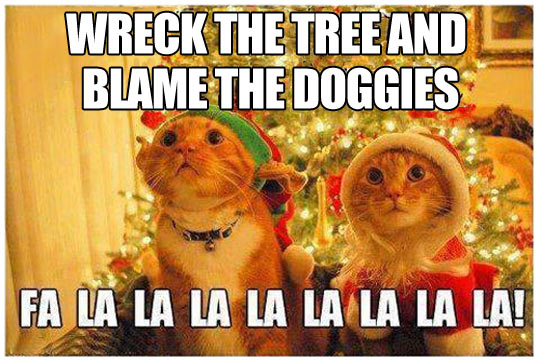 funny-cats-Christmas-song-tree