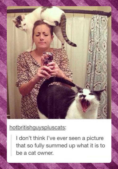 funny-cats-bathroom-owner-selfie-phone